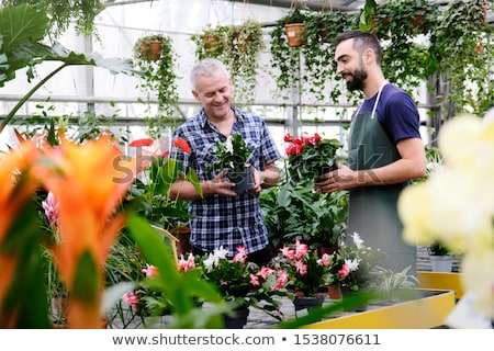 Sales Manager Talking To Client Buying Plant in Florist Shop Stock photo © diego_cervo