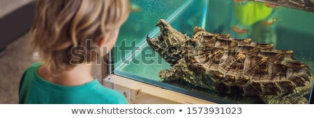 Little kid boy admire big turtles in terrarium through the glass BANNER, LONG FORMAT Stock photo © galitskaya