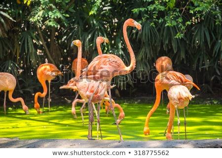 Oiseaux zoo Bangkok Safari monde été Photo stock © bloodua