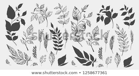 yaprak · el · beyaz - stok fotoğraf © gaudiums