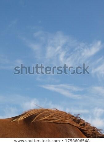 Blue sky cair doce nozes sementes naturalismo Foto stock © yoshiyayo