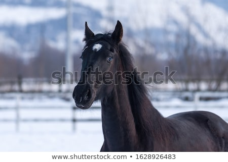 Colt in winter day Stock photo © frank11