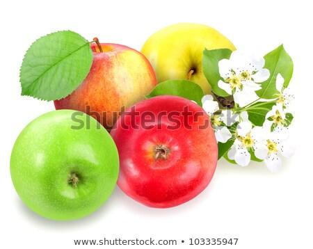 Fresco maçãs folha verde flores branco Foto stock © boroda