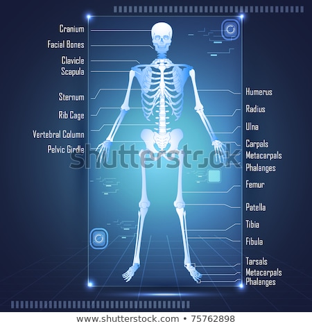 Model of human body showing internal organs  Stock photo © cozyta