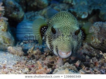 Közelkép Vörös-tenger víz hal kék élet Stock fotó © stephankerkhofs