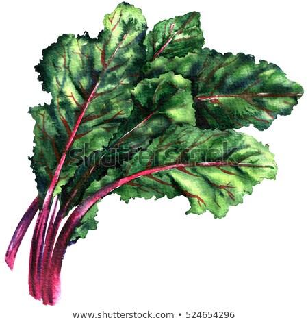 plantaardige · tuin · volwassen · voedsel · blad · groene - stockfoto © sherjaca