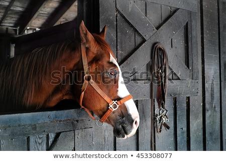 horse in corral ranch scene Stock photo © goce