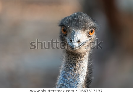 Haarig Kopf orange Auge Stock foto © billperry