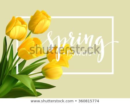 belle · rose · jaune · tulipe · fleur · feuilles · vertes - photo stock © pab_map