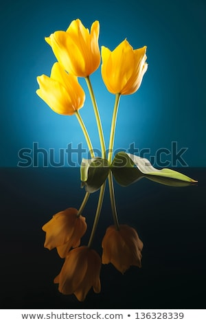 three yellow tulips with reflexion on a table Stock photo © feedough