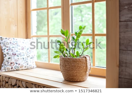 flower pots on window stock photo © trala