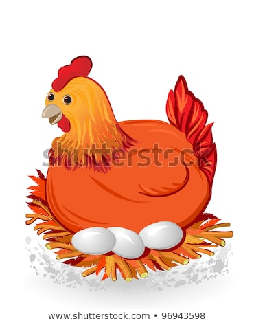 Nest Hen Chicken Isolated Wings Feathers Outline Agriculture White Birds Rooster Sitting Stok fotoğraf © denisgo