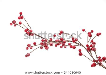 красный Ягоды дерево лес природы фрукты Сток-фото © imagex