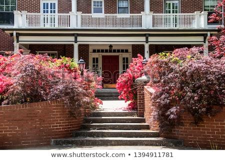 beautiful azalea tree with old steps stock photo © julietphotography