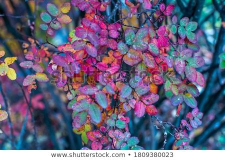 茂み · 秋 · 色 · 小枝 · 花 - ストックフォト © EFischen