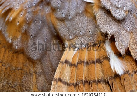 chouette · oeil · bois · neige · oiseau - photo stock © kirill_m