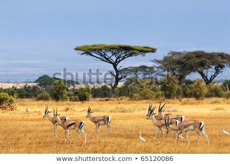 Gazelle africaine paysage illustration silhouette arbre Photo stock © adrenalina