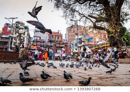 Pigeons flying at Durbar Square in Kathmandu Stock photo © dutourdumonde