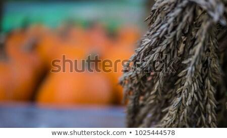 Pumkin and corn stalks Stock photo © njnightsky