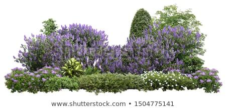 Zöld bokor színes virágok illusztráció virág Stock fotó © bluering