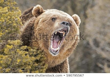 Bush illustratie natuur landschap achtergrond Stockfoto © bluering