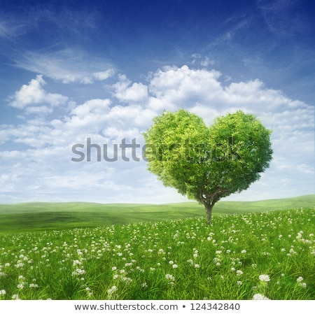 Floral heart on the grass with the bright sky stock photo © rufous