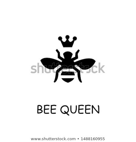 Foto stock: Vetor · estilo · ilustração · rainha · abelha · ícone