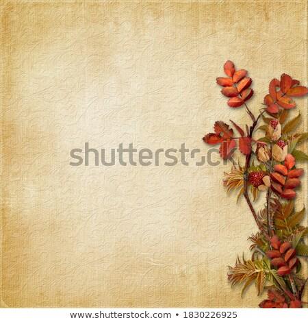 Outono encanto cópia espaço imagem abóbora folhas Foto stock © klsbear