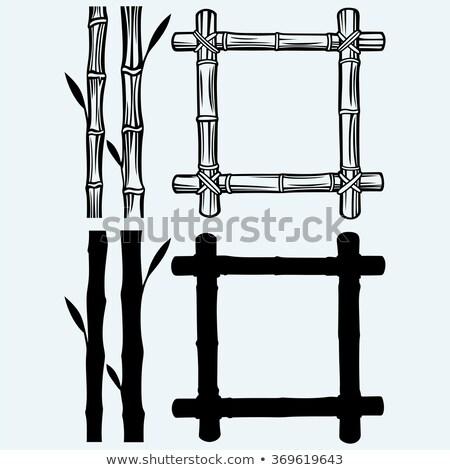 establecer · monos · naturaleza · marcos · ilustración · diversión - foto stock © kup1984
