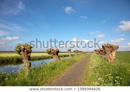 Wilg natuur holland gebruikt productie hout Stockfoto © compuinfoto