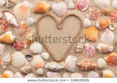 Kalp kabukları plaj sevmek yaz seyahat Stok fotoğraf © IS2