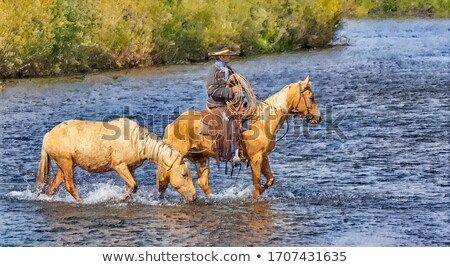 Crossing river on horseback Stock photo © backyardproductions