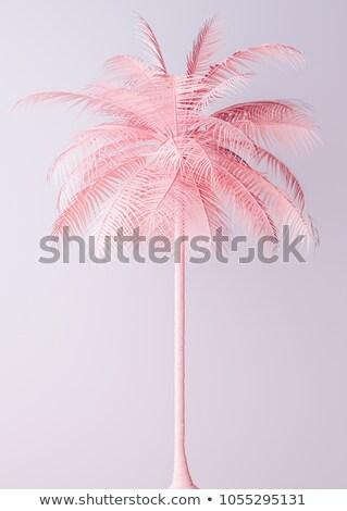 сюрреалистичный розовый пальма листьев фантазий природы Сток-фото © dolgachov