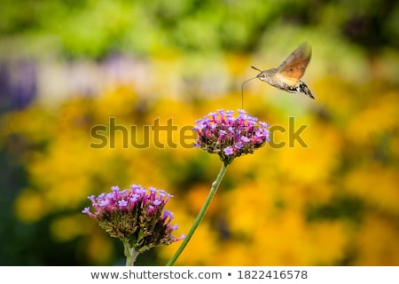 A hummingbird on blurry background Stock photo © bluering
