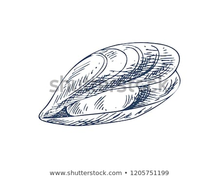 Mylitus Mussel Bivalve Mollusk Seafood Poster Stock photo © robuart