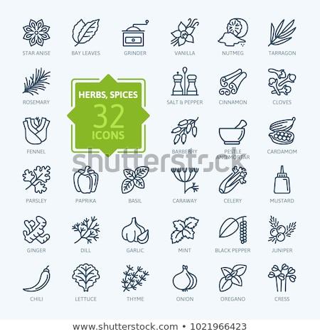 Petrezselyem ikon szín terv természet zöld Stock fotó © angelp