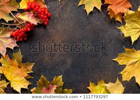 Autumn maple red leaves and viburnum berries stock photo © Illia