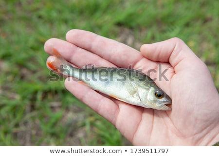 Big hand baiting love man Stock photo © ra2studio