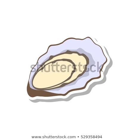 カキ シェル アイコン 孤立した 白 新鮮な ストックフォト © MarySan
