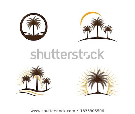 Tarih palmiye ikon ağaç gıda Stok fotoğraf © bspsupanut
