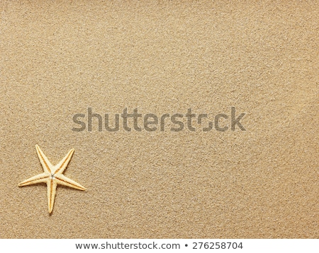 Stock photo: starfish and seashells on beach sand