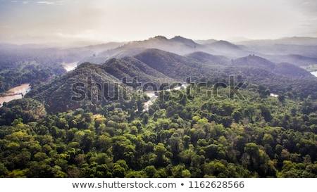 Bomen park Vietnam hemel stad natuur Stockfoto © galitskaya
