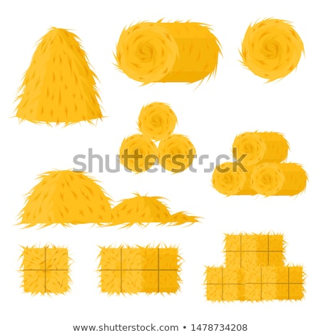 paja · trigo · cosecha · campo · planta - foto stock © lightsource