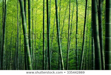Verde bambu mata ilustração parede projeto Foto stock © bluering