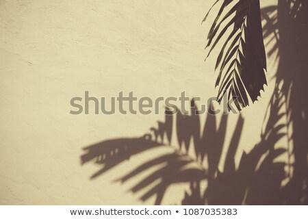 солнечный свет отражение желтый поверхность стены тень Сток-фото © sedatseven