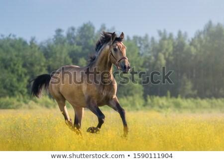 Csődör fut mező tehén zöld farm Stock fotó © goce