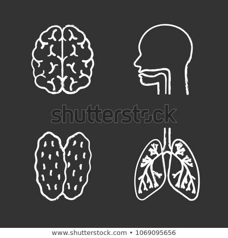 Blackboard man school medische geneeskunde Stockfoto © leeser