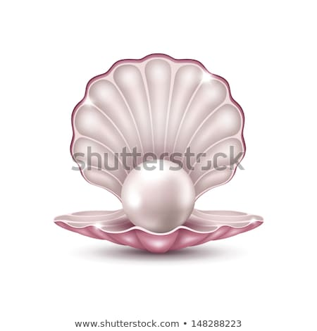 Beautiful shell with pearl isolated, vector illustration  Stock photo © carodi