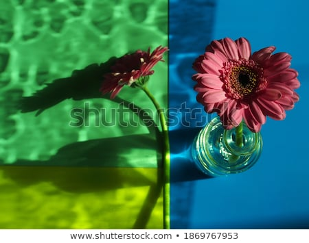 Gerbera view from under stock photo © zhekos