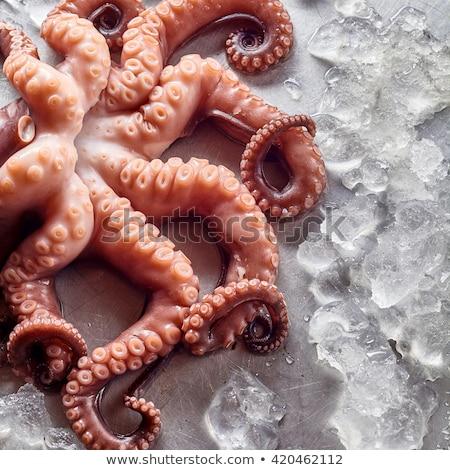 Raw Squid on Ice Stock photo © ildi